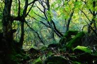 Ormanın Derinlikleri...