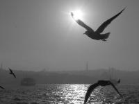 Deniz Kuşu