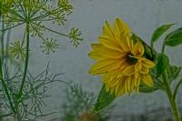 Son Çiçek