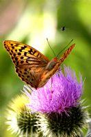 Kelebeğin İzinde