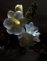Frzya Çiçeği