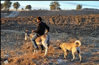 Çoban Nezirin Arkadaşı Murat 2