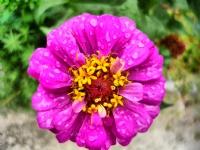 Çiçek Ve Damlacıklar