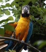 Papağan Türü