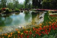 Baharın Renkleri..