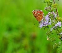 Çiçekler Açtı, Uçacak Kelebekler