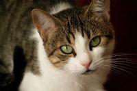 Kedinin Güzeli Muamma