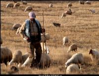 Çoban Ali