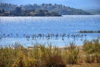 Bafa Gölü Flamingoları