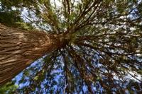 Ağaç Gibi Olmak