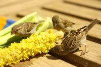 İzmirin Kuşları