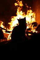 Kedi Silüeti...