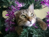 Toshka & Noel Tree...
