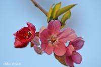 Bahar Gelmiş