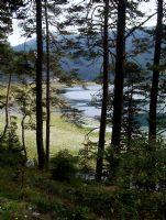 Ağaçlar Arasından Abant Gölü
