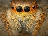 Muhteşem Gözler