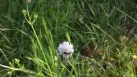 Böcek Ve Çiçek İkilisi