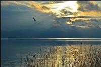 İznik Gölünden..