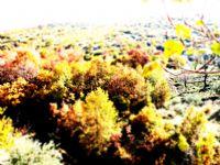 Sonbahar Renkleri..