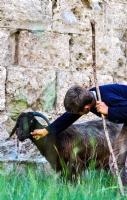 Çoban Aşkı