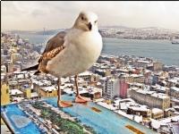 Galata Kulesinden Kuşbakışı  İstanbul