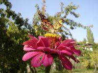 Kelebeğe Poz Verdikmek