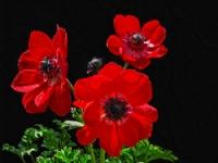 Ece Aktansel Çiçekleri-1