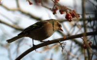 Fotojenik Kuş