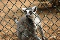 Esaret Ve Lemur