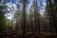 Ormanın Sessizliği