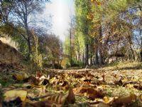 Gesi Bağlarında Sonbahar