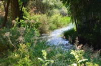 Su Ve Yeşilik