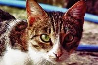 Bir Kedi Gördüm Sanki :)