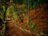 Hazan Mevsimi 5