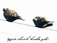 Ah Kuşlar..