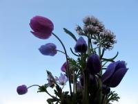 Bir Demet Bahar Çiçekleri...