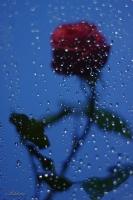 Yağmurda...