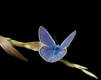 Bir avu� mavi.. - Foto�raf: Hulya Hulya