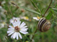 Çiçek Ve Salyangoz