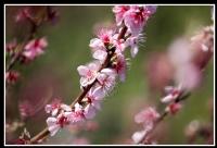 Çiçek Açmış Ağaçlar Gibi