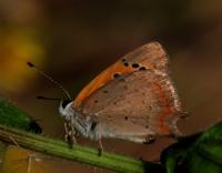 Kelebe