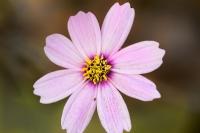 Sonbaharın Son Çiçekleri