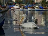 Balıkçı Barınağı Bir İzmir Güzellemesi