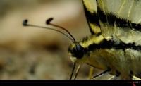 Bir Kelebeğin Portresi