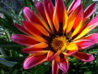 Baharda Çiçek