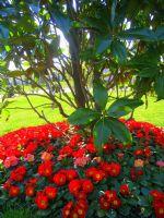 Ağaç Kökünde Bahar