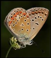 Kelebekler Zariftr