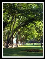 Ağaçlar.....