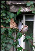 Bir Dal İle İki Kuş:)...