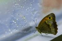 Kelebek Ve Camdaki Yansıması
